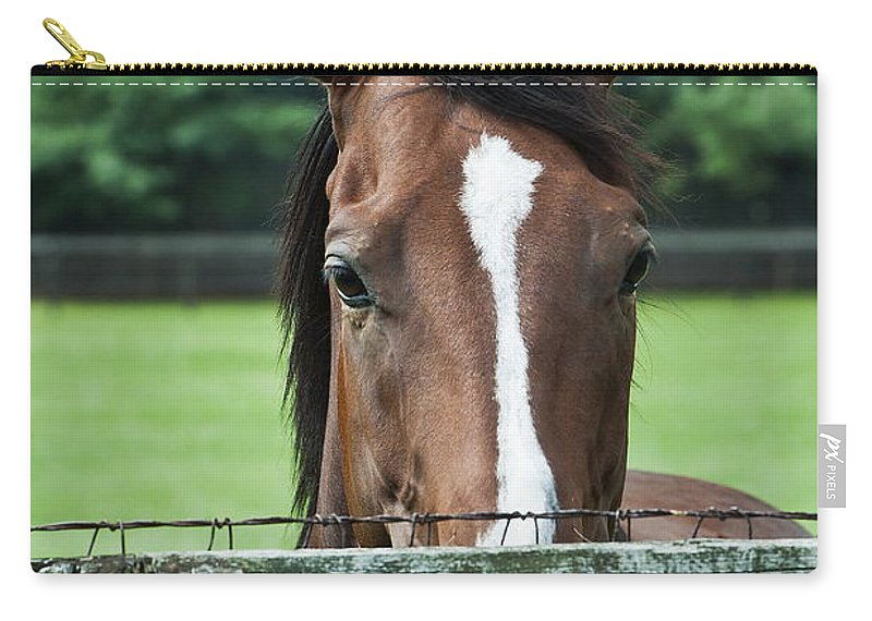 Thoroughbred Carry-all Pouch featuring the photograph Horse by John Greim