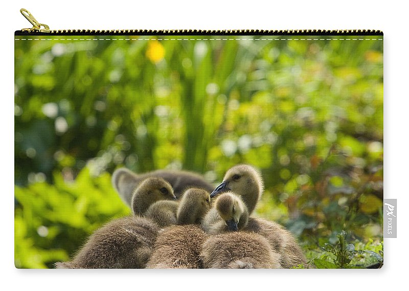 Geese Carry-all Pouch featuring the photograph Huddled Goslings Baby Geese Along River's Edge by Stephanie McDowell