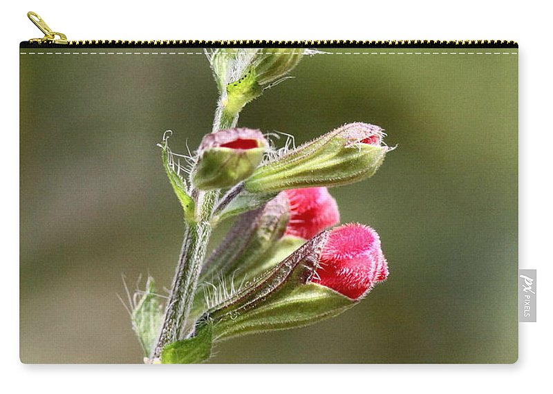 Carry-all Pouch featuring the photograph Hummer Food by Travis Truelove