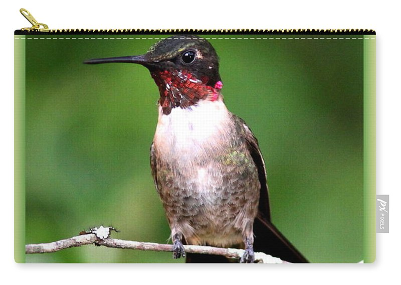 Hummingbird Carry-all Pouch featuring the photograph Hummingbird - Male - Will Soon Be Grown by Travis Truelove