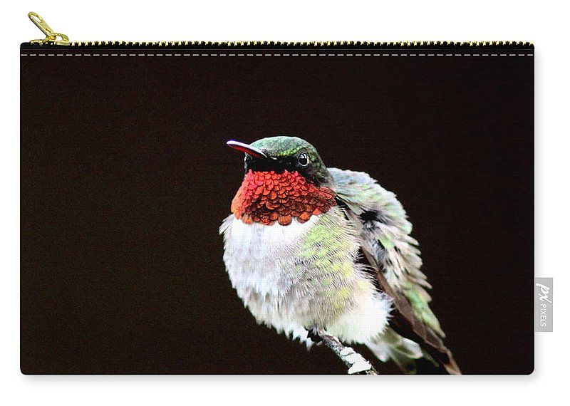 Hummingbird Carry-all Pouch featuring the photograph Hummingbird - Ruffled Feathers by Travis Truelove