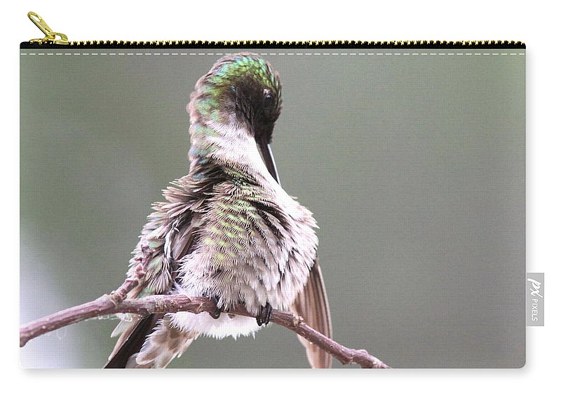 Hummingbird Carry-all Pouch featuring the photograph Hummingbird - Cleaning Up by Travis Truelove