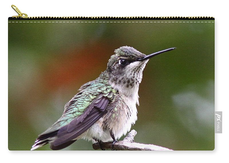 Hummingbird Carry-all Pouch featuring the photograph Hummingbird - Little Friend by Travis Truelove