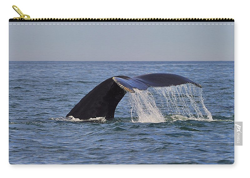 Humpback Whale Carry-all Pouch featuring the photograph Humpback Fluke by Tony Beck