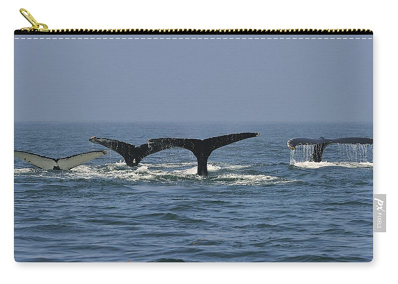 Humpback Whale Carry-all Pouch featuring the photograph Humpback Flukes by Tony Beck