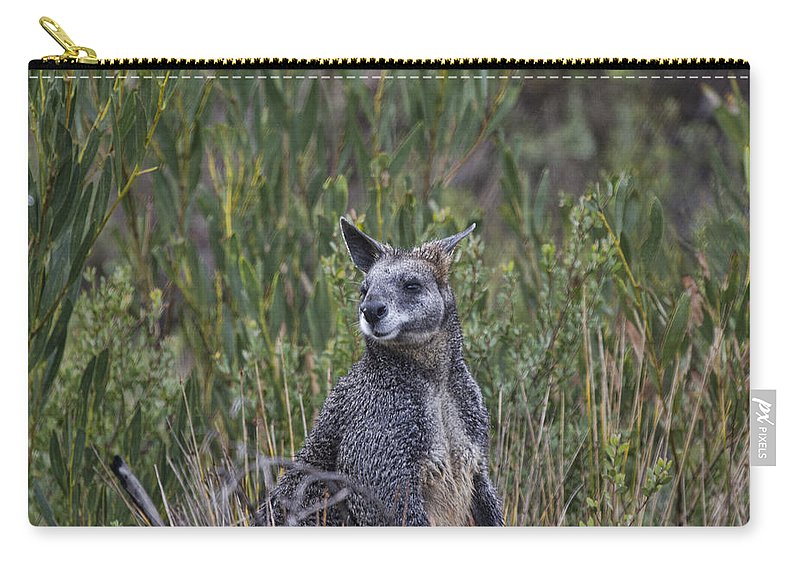 Wallaby Carry-all Pouch featuring the photograph I Am Listening by Douglas Barnard