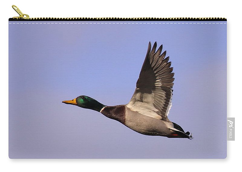 Carry-all Pouch featuring the photograph I Can Fly by Travis Truelove