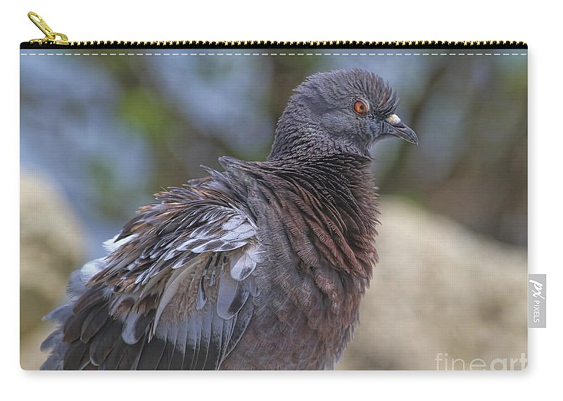 Pigeon Carry-all Pouch featuring the photograph I Have The Look by Deborah Benoit