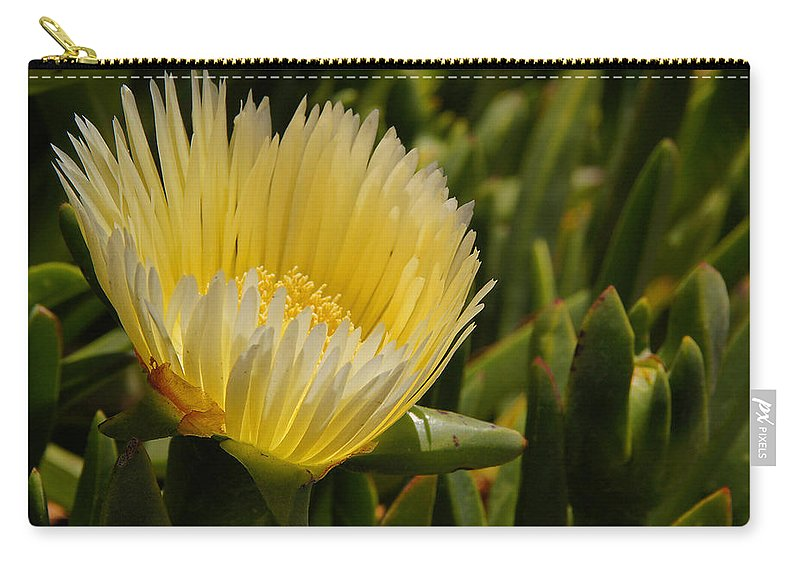 Central Coast Carry-all Pouch featuring the photograph Ice Plant Bloom by Mick Anderson