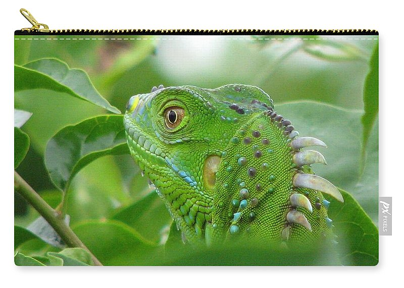 Iguana Carry-all Pouch featuring the photograph Iggy by Patricia Blake