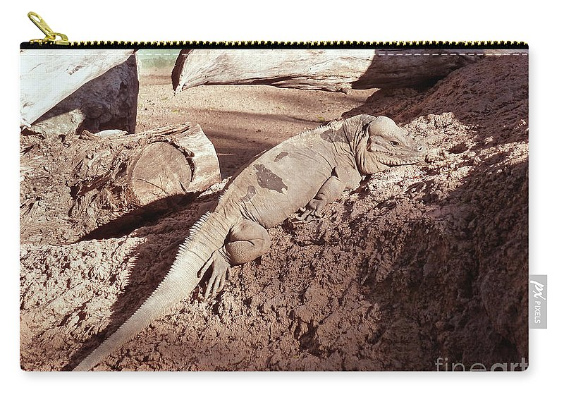 Iguana In The Sun Carry-all Pouch featuring the photograph Iguana In The Sun by Methune Hively