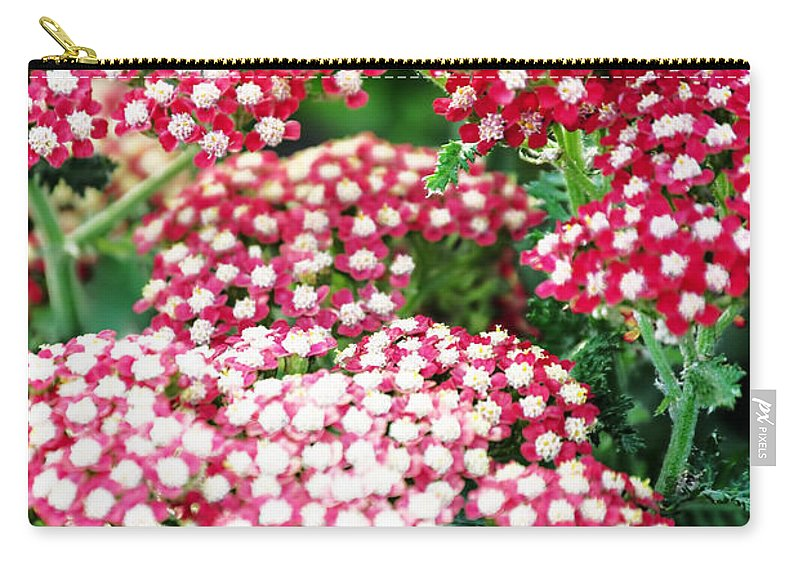 Carry-all Pouch featuring the photograph In A World So Small by Michael Frank Jr