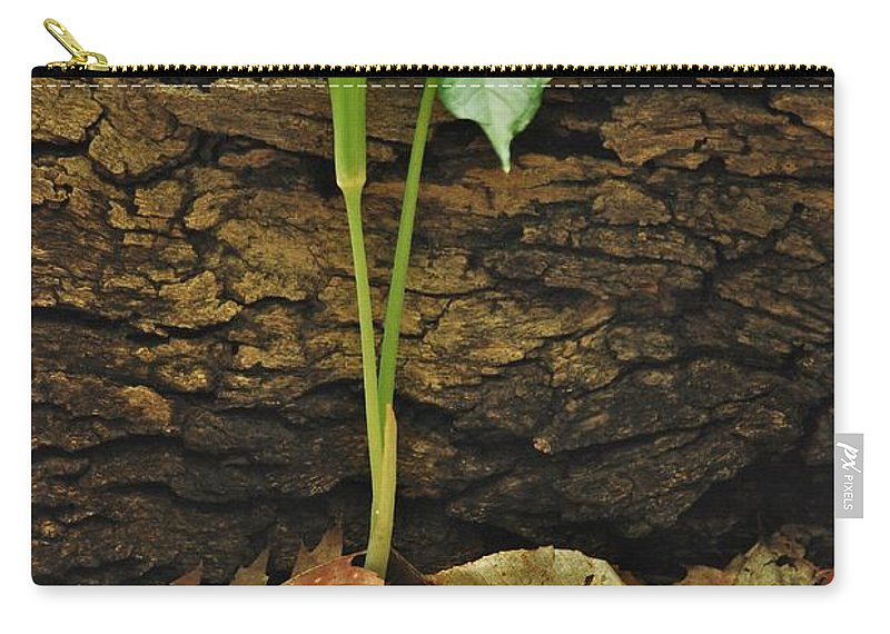 Arisaema Triphyllum Carry-all Pouch featuring the photograph Indian Turnip 5582 0240 by Michael Peychich