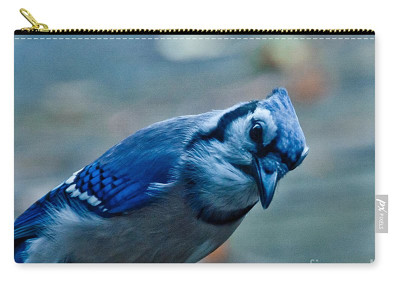 Blue Jay Carry-all Pouch featuring the photograph Inquiring by Cheryl Baxter