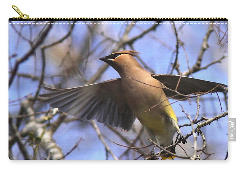 Cedar Waxwing Carry-all Pouch featuring the photograph It's Flying Time Again by Travis Truelove