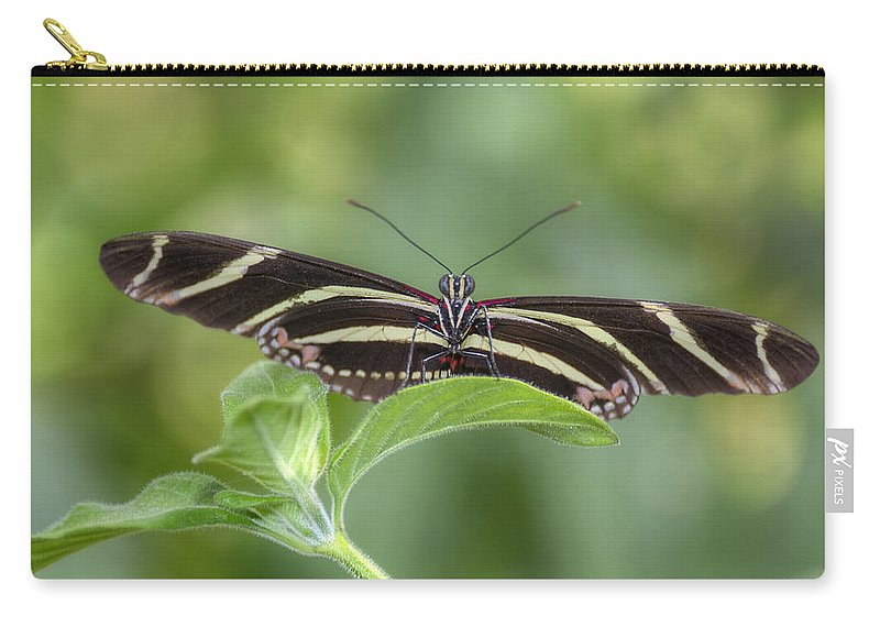 Zebra Longwings Butterfly Carry-all Pouch featuring the photograph I've Got My Eye On You by Saija Lehtonen