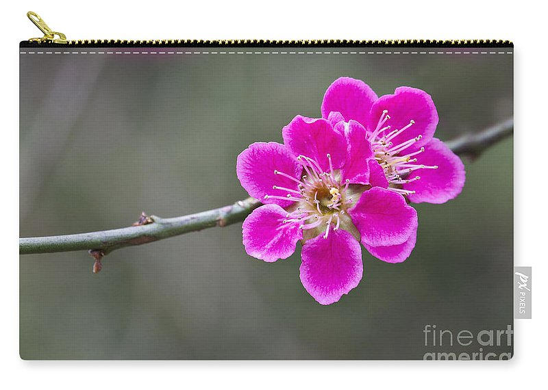 April Carry-all Pouch featuring the photograph Japanese Flowering Apricot. by Clare Bambers