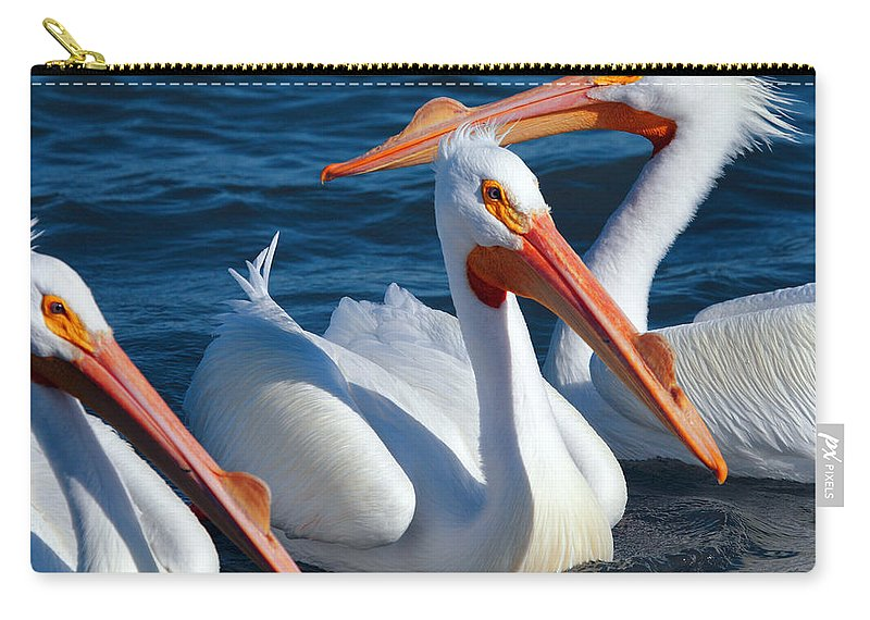 American White Pelican Carry-all Pouch featuring the photograph Just Hanging Out by Andrew McInnes