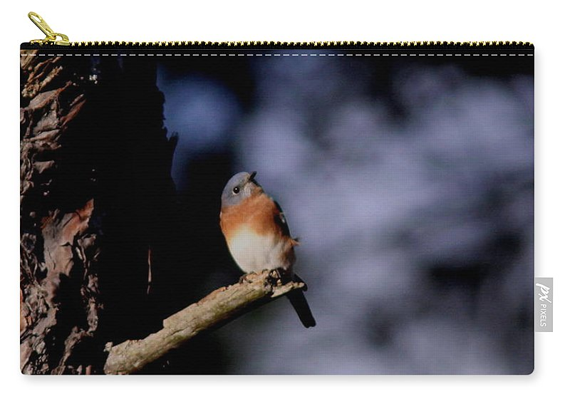 Eastern Bluebird Carry-all Pouch featuring the photograph Just Waiting by Travis Truelove