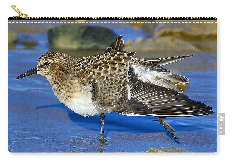 Baird's Sandpiper Carry-all Pouch featuring the photograph Juvenile Baird's Sandpiper by Tony Beck