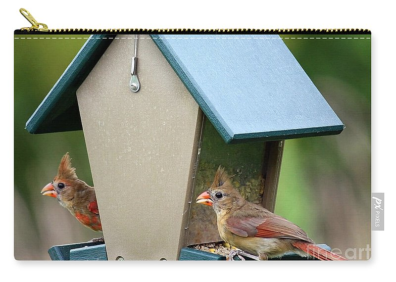 Cardinals Carry-all Pouch featuring the photograph Juvenile Cardinals On Feeder by Carol Groenen