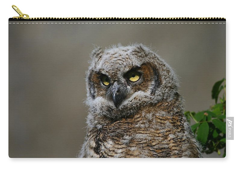 Alaska Carry-all Pouch featuring the photograph Juvenile Great Horned Owl by Doug Lloyd