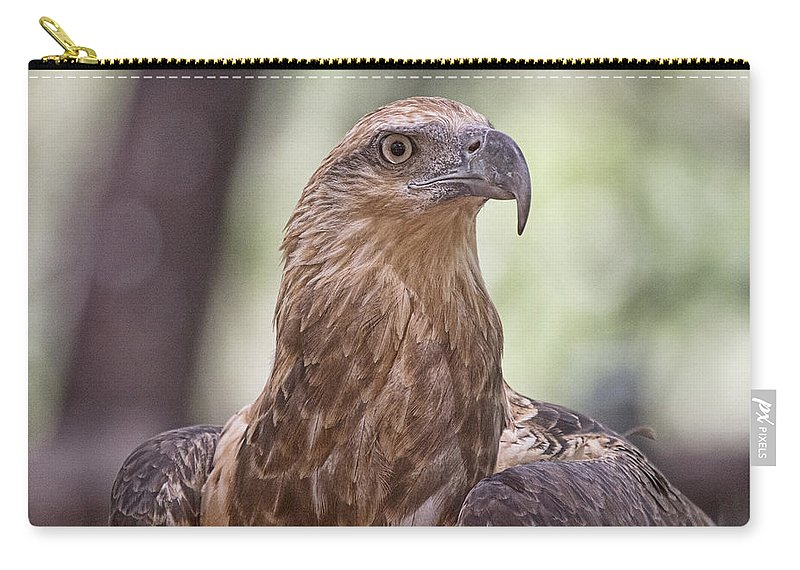 Juvenile Carry-all Pouch featuring the photograph Juvenile Sea Eagle by Douglas Barnard