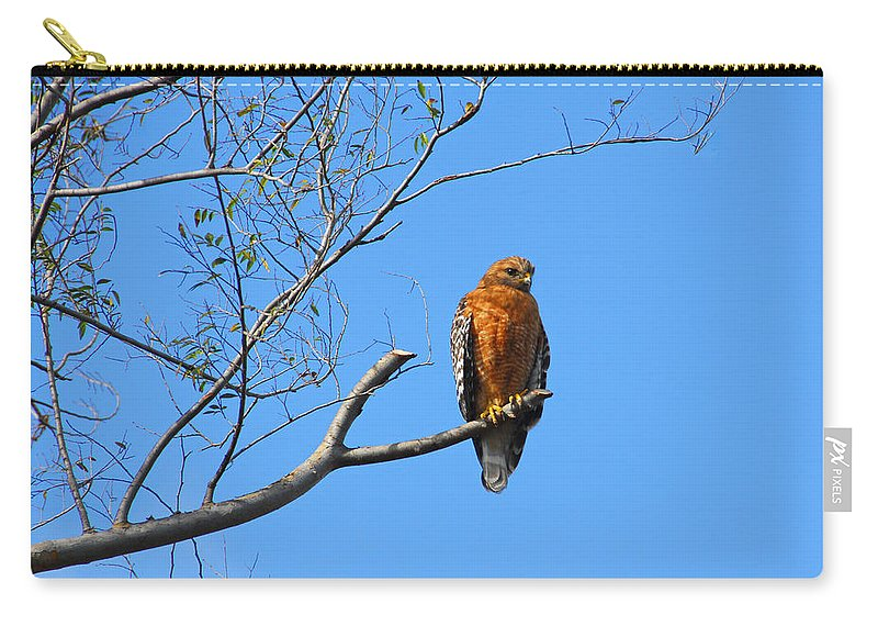 Hawks Carry-all Pouch featuring the photograph Keeping An Eye On You by Lynn Bauer