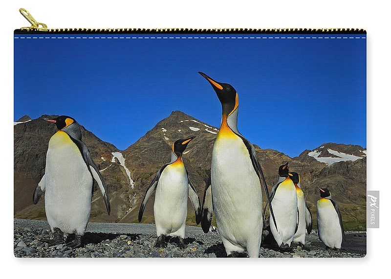 King Penguin Carry-all Pouch featuring the photograph King Penguins - Road Block by Tony Beck