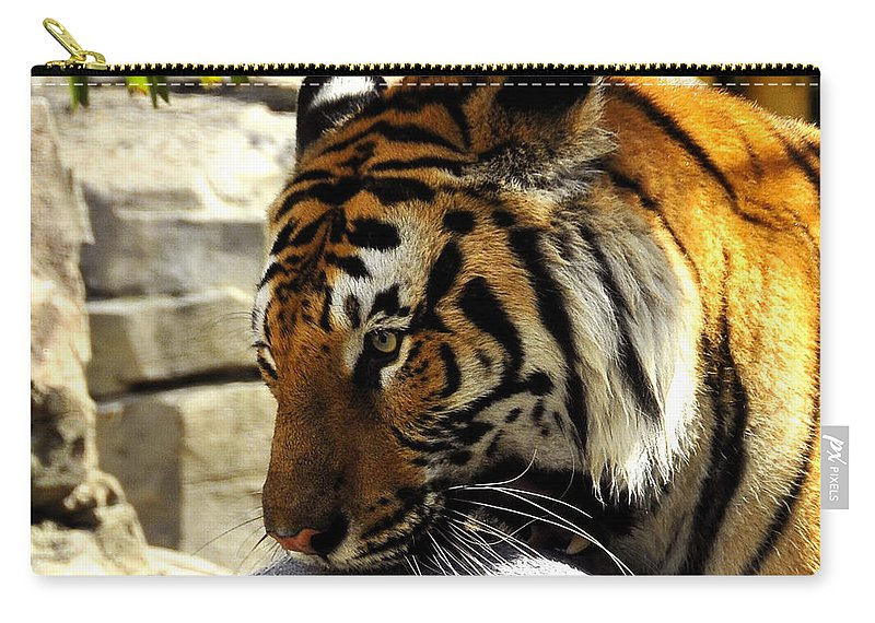 Fine Art Photography Carry-all Pouch featuring the photograph Kitty Play by David Lee Thompson