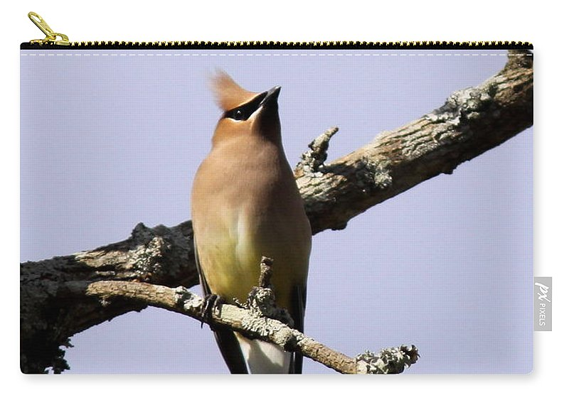 Cedar Waxwing Carry-all Pouch featuring the photograph Knot Head by Travis Truelove