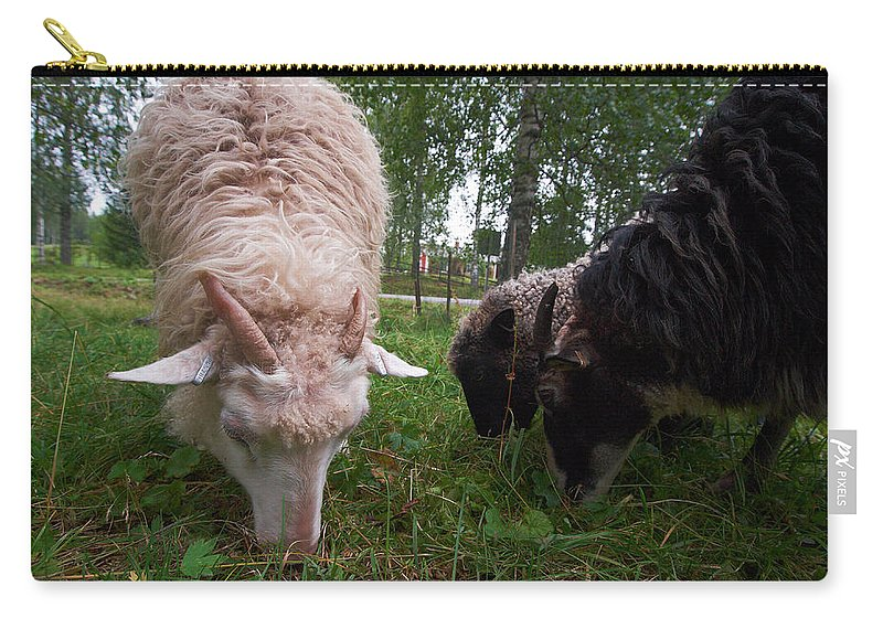 Seitseminen Carry-all Pouch featuring the photograph Kovero Sheeps by Jouko Lehto