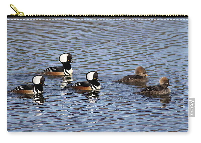 Hooded Mergansers Carry-all Pouch featuring the photograph Ladies First by Travis Truelove