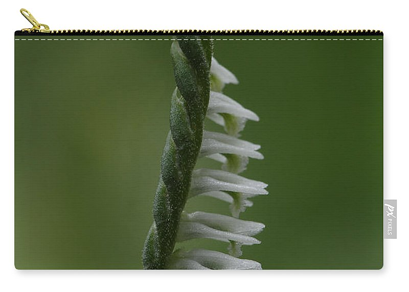 Northern Slender Ladies'-tresses Carry-all Pouch featuring the photograph Ladies' Tresses Orchid by Daniel Reed