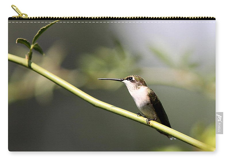 Hummingbird Carry-all Pouch featuring the photograph Lady Alone by Travis Truelove