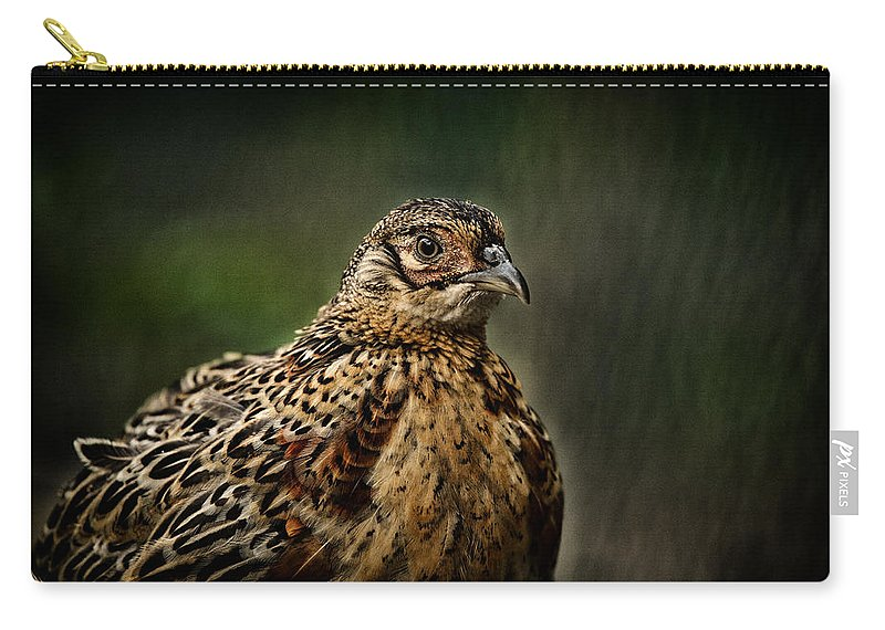 Pheasant Carry-all Pouch featuring the photograph Lady Pheasant by Karol Livote