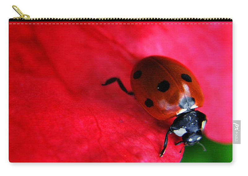 Yhun Suarez Carry-all Pouch featuring the photograph Ladybird On Petal by Yhun Suarez