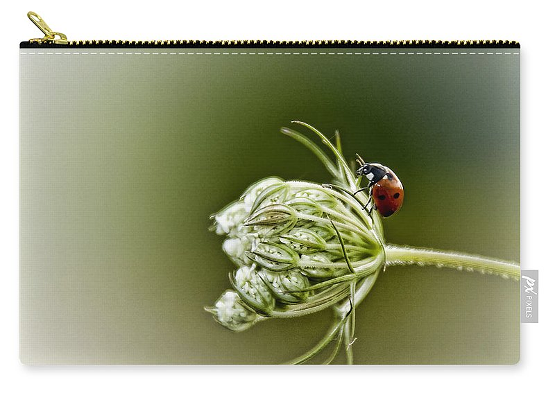 Queen Anne's Lace Carry-all Pouch featuring the photograph Ladybug Ladybug Fly Away Home by Linda Clifford