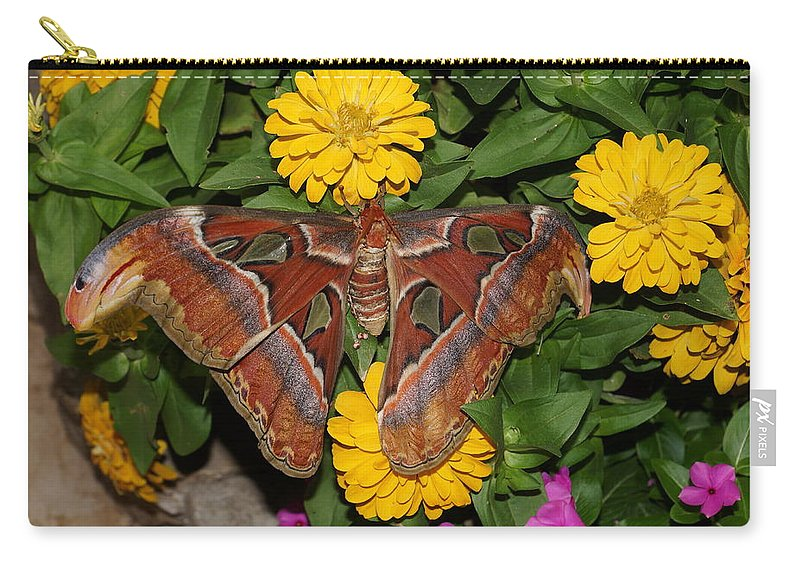 Yellow Carry-all Pouch featuring the photograph Large Moth by Alan Hutchins
