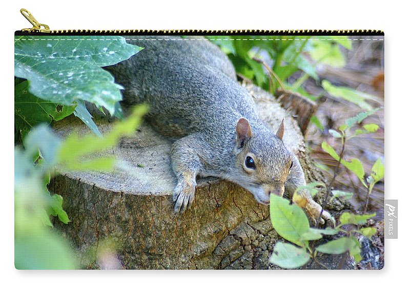 Squirrel Carry-all Pouch featuring the photograph Laying Low by Ben Upham III
