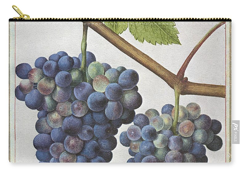 1585 Carry-all Pouch featuring the photograph Le Moyne: Grape Vine, C1585 by Granger