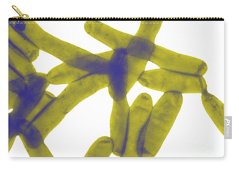 Bacteria Carry-all Pouch featuring the photograph Legionella Pneumophila by Science Source