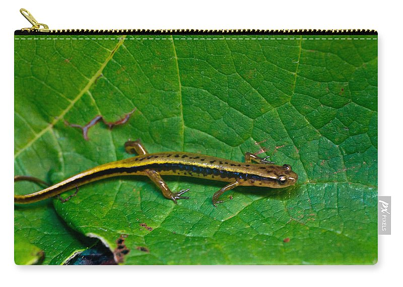 Eurycea Carry-all Pouch featuring the photograph Lined Salamander 3 by Douglas Barnett