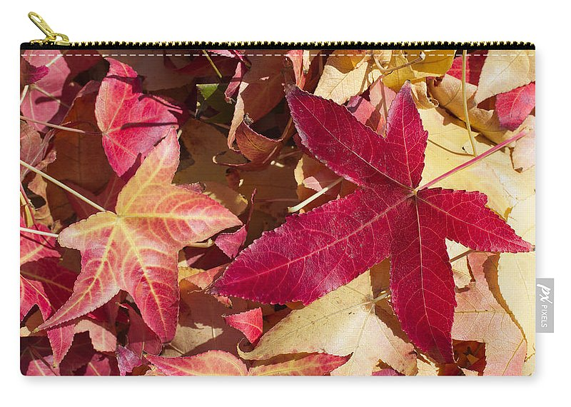 Abstract Carry-all Pouch featuring the photograph Liquidambar Autumn by Heidi Smith