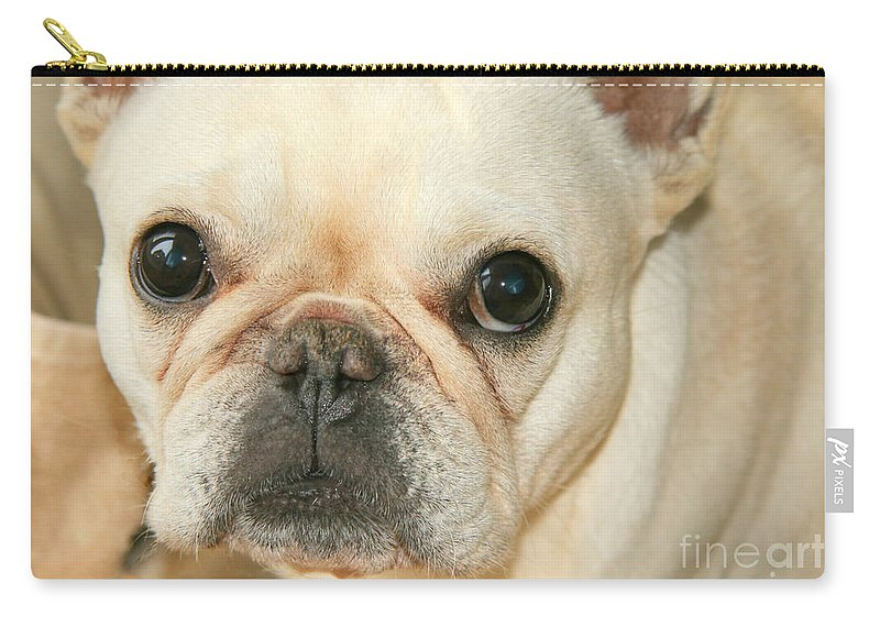 French Bulldog Carry-all Pouch featuring the photograph Listening by Tap On Photo