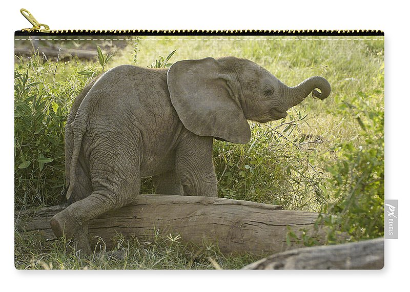 Africa Carry-all Pouch featuring the photograph Little Cutie by Michele Burgess