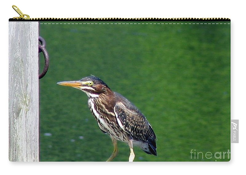 Heron Carry-all Pouch featuring the photograph Little Green Heron by Art Dingo
