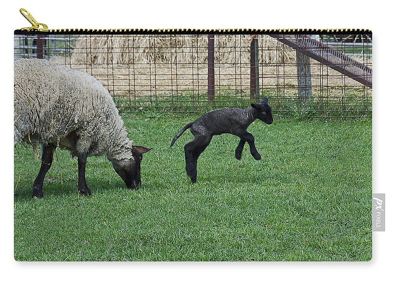Usa Carry-all Pouch featuring the photograph Little Lamb Playing by LeeAnn McLaneGoetz McLaneGoetzStudioLLCcom