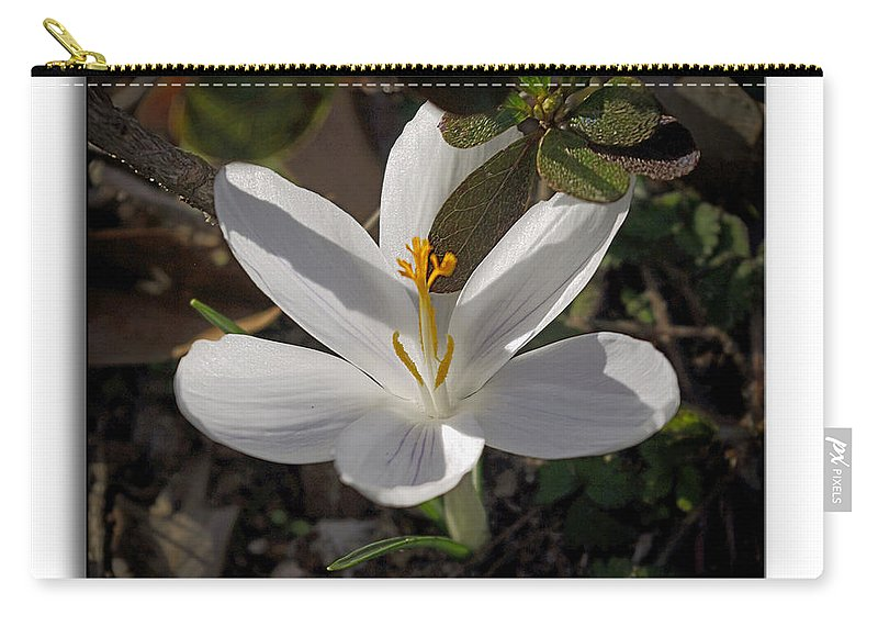 Brian Wallace Carry-all Pouch featuring the photograph Little White Flower by Brian Wallace