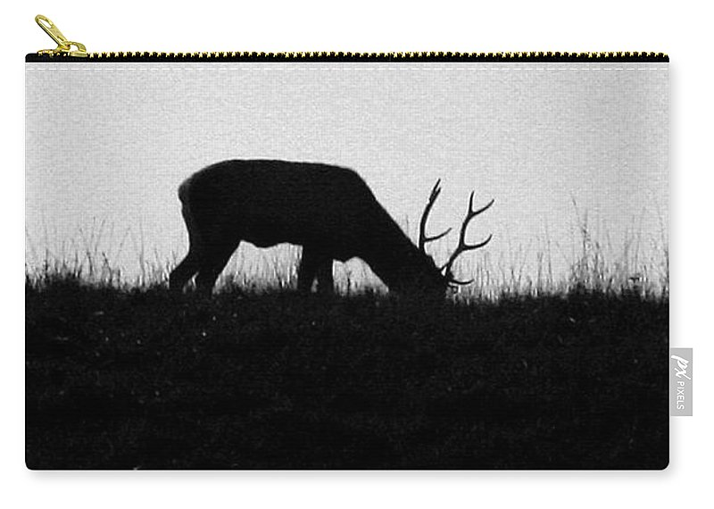 Deer Carry-all Pouch featuring the photograph Lone Male Grazing On Top Of Hill. by Crystal Heitzman Renskers
